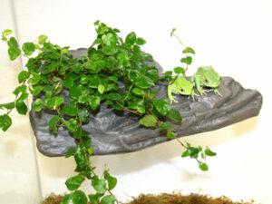 MagNaturals Planter Ledges